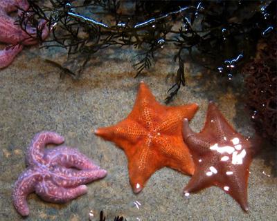 Travel For Kids Monterey Bay Aquarium Photos