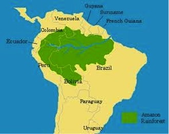 The Perfect Brazilian Vacation - Tropical Rain FOREST