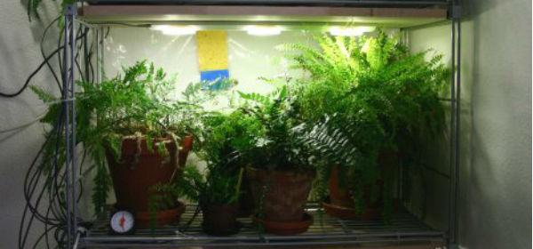 Led Indoor Grow Lights