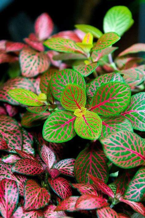 10 indoor plants clean air rhythm home