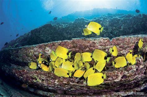 scuba diving kauai hawaii sport diver