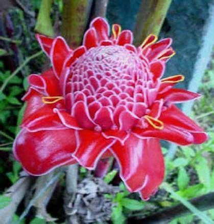 animals tropical rainforest biome plants places pinterest rainforest
