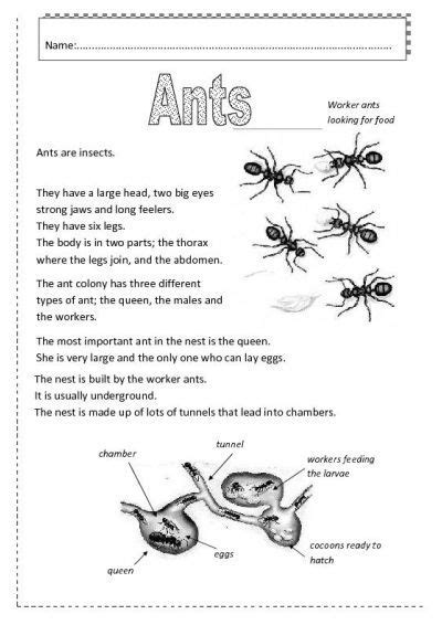 ants images ants worksheet ants ants activities