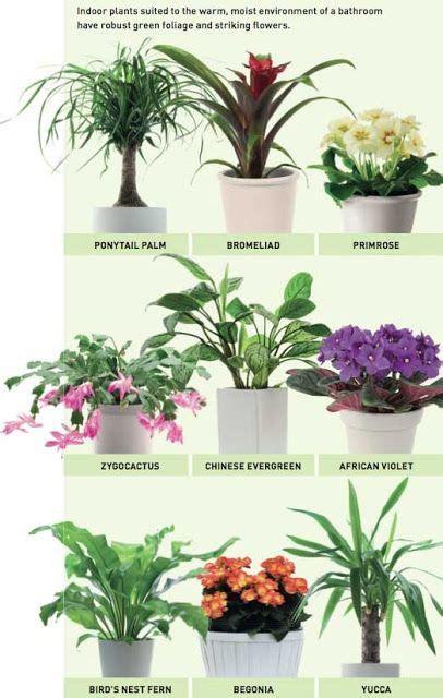 flori potrivite pentru baieml indoor plants plants bathroom