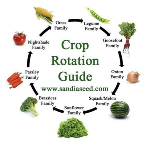good crop rotation important sandia seed company