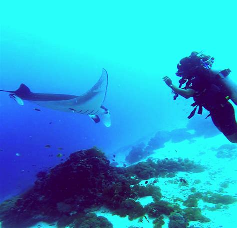 7 scuba diving tips beginners scuba diving scuba