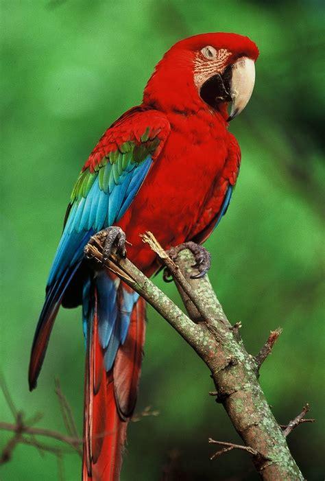 tropical rainforest birdg biological science picture directory pulpbits