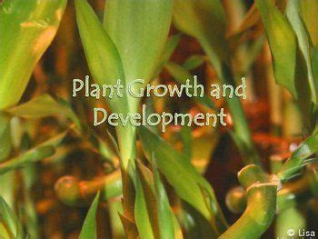 plant growth development powerpoint presentation lesson plan plant