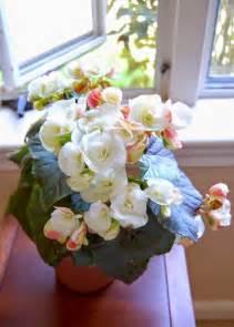 18 flowering plants indoors images pinterest flower plants