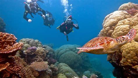 port douglas scuba diving trips outer great barrier