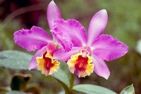 tropical rainforest plant life gardenerdy