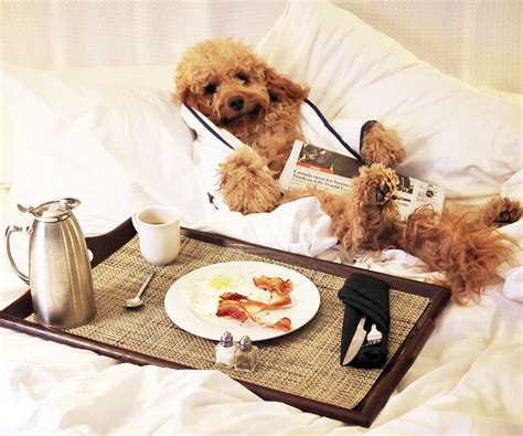 pet friendly hotels instyle
