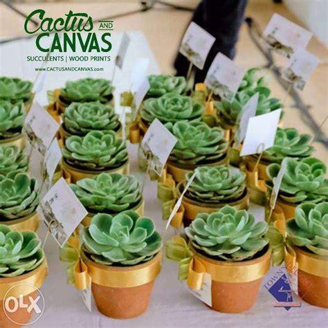 rose cactus succulent plant souvenirs manila sale philippines