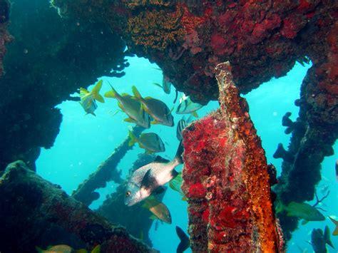 wreckreational dives miami beach fl