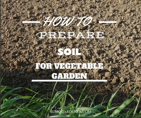 prepare soil vegetable garden sumo gardener