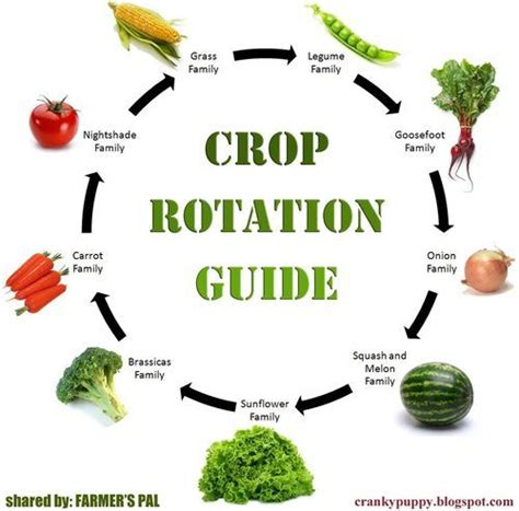 crop rotation tips gardening results exles vegetables charts