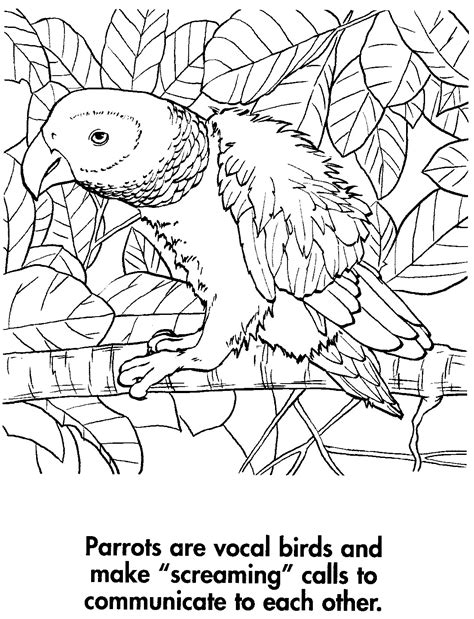 sport life planet earth coloring book awesome animals