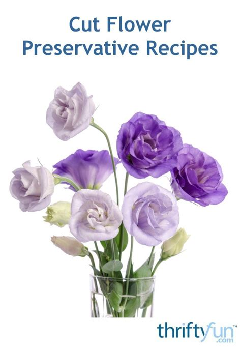 cut flower preservative recipes thriftyfun