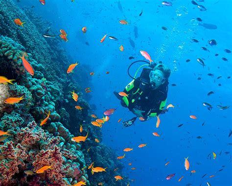 scuba diving great barrier reef ribbon reef spirit