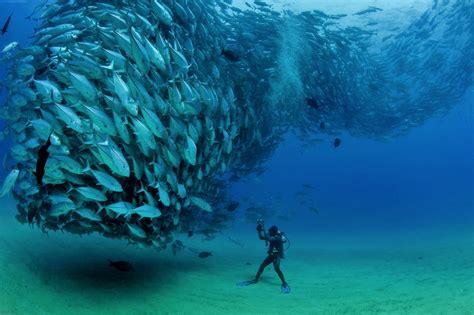 scuba diving great barrier reef reef trip