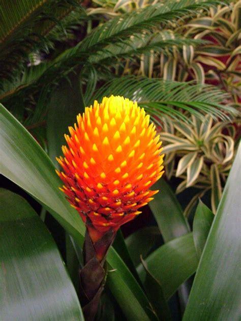 tropical rainforest plants biological science picture directory pulpbits