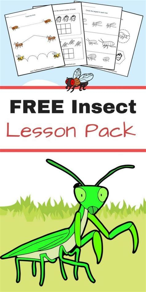 free insect worksheets great elementary students insect activities