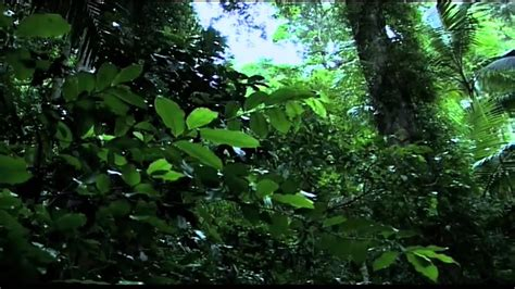 tropical rainforest biome pokemon search tips tricks cheats