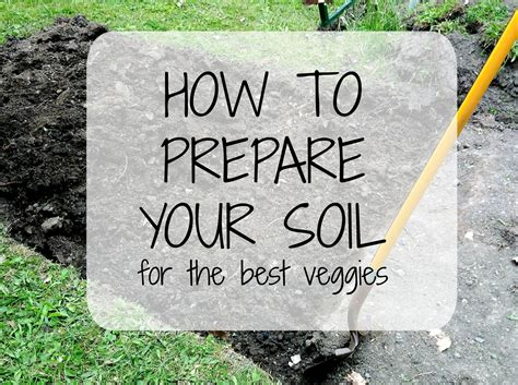 preparing soil guide strayed table