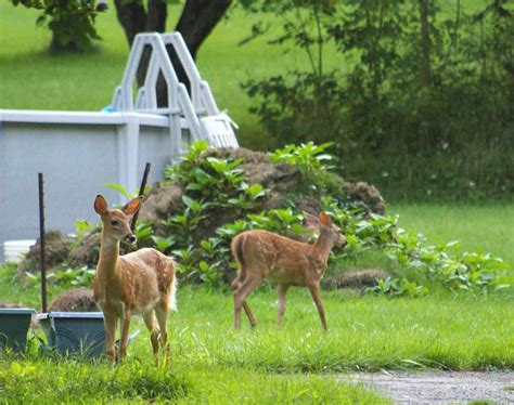 attracting backyard wildlife costly time consuming