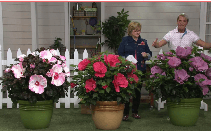 QVC Cottage Farms Flowers Plants | Gardening: Flower and