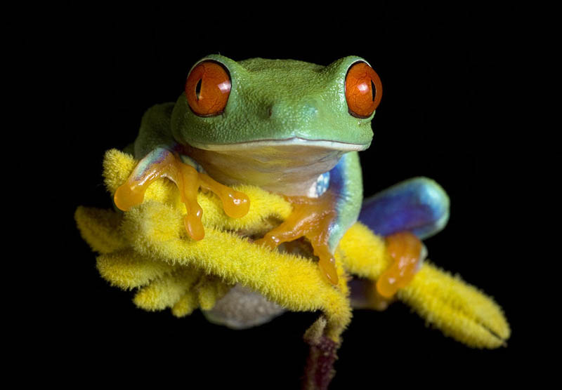 10 Reasons Frogs Are Awesome [25 Pics] «TwistedSifter
