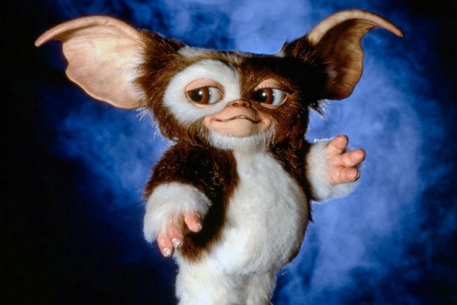 Taming a Gremlin with Better Sleep Gizmo a Mogwai  the cute furry stage  from Gremlins