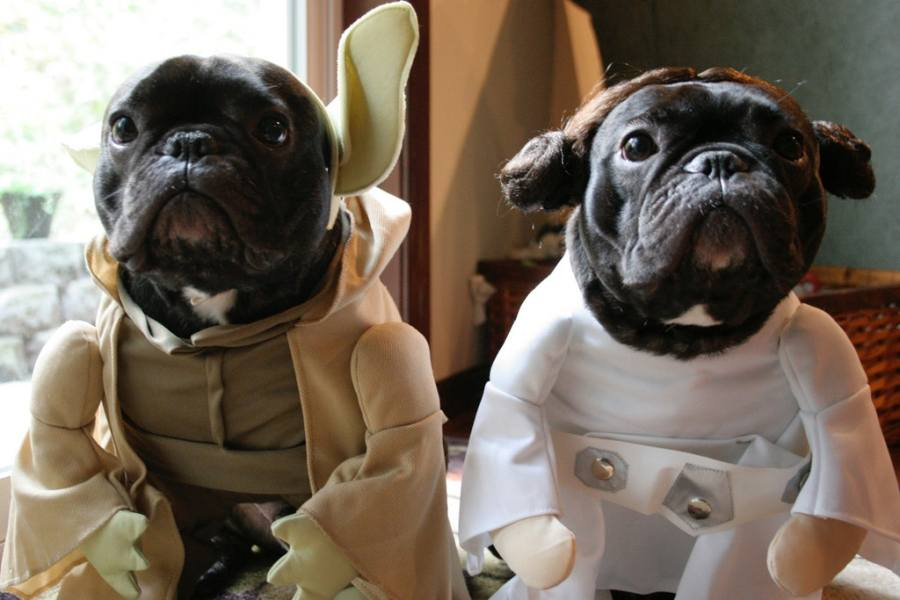 May The Fourth Be With You  13 Animals Who Are Having A Way Better     May The Fourth Be With You  13 Animals Who Are Having A Way Better Star  Wars Day Than You