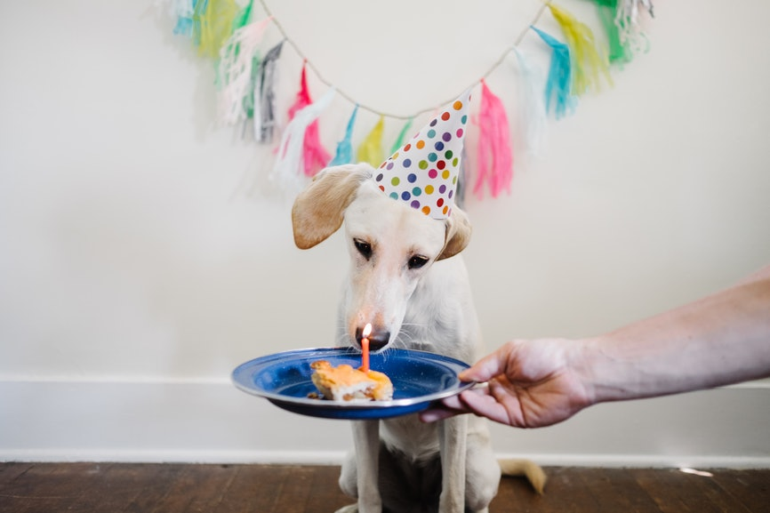 6 Unique Ways To Celebrate Your Dog S Birthday With A Paw