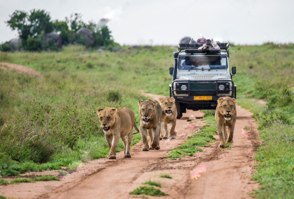 Tips to having the best out of you Pearl of Africa Safari - Uganda Safaris