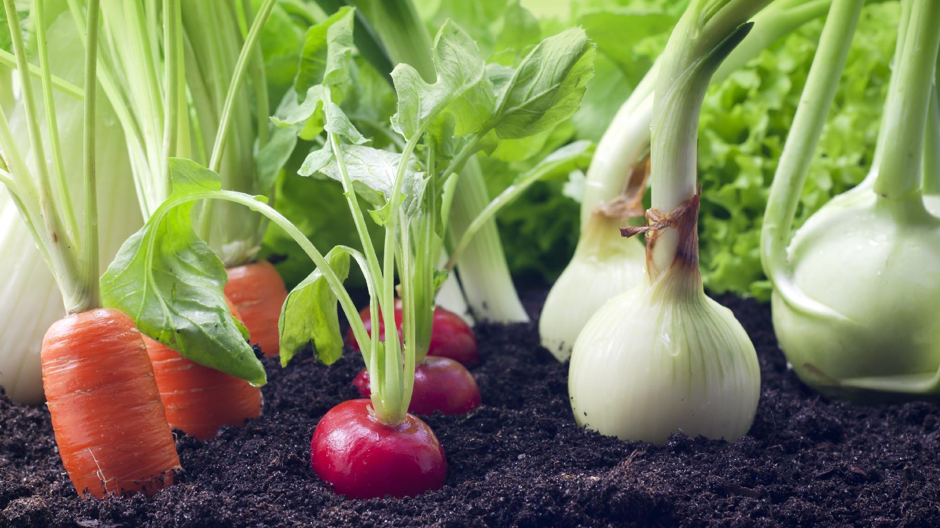 ¿Crisis alimentaria? 18 verduras que crecen en menos de 60 días