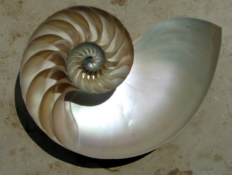 Calculus   Wikipedia The logarithmic spiral of the Nautilus shell is a classical image used to  depict the growth and change related to calculus