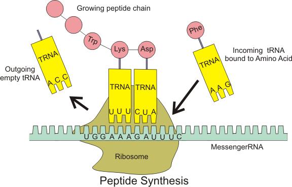 Description Acids And Bases