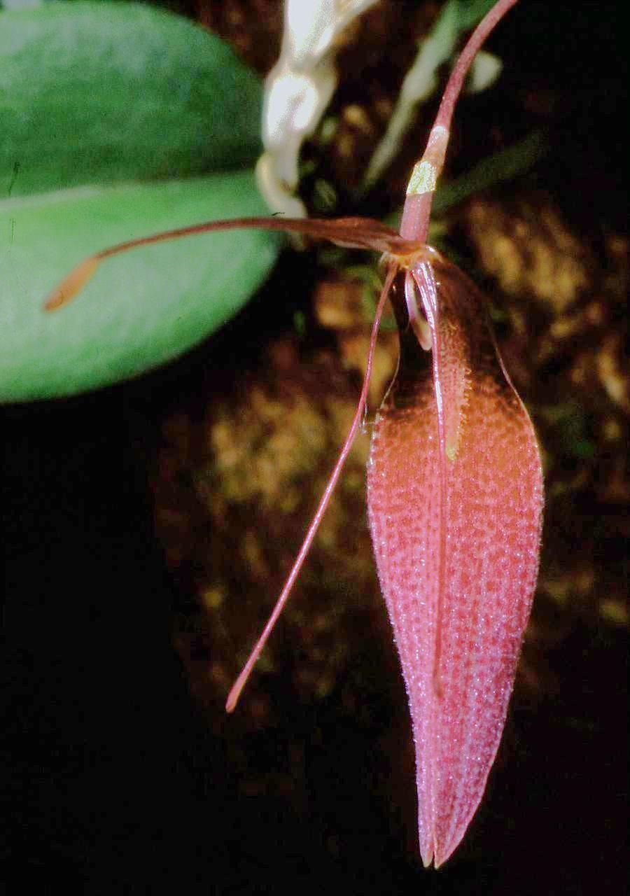 Pictures And Names Orchids