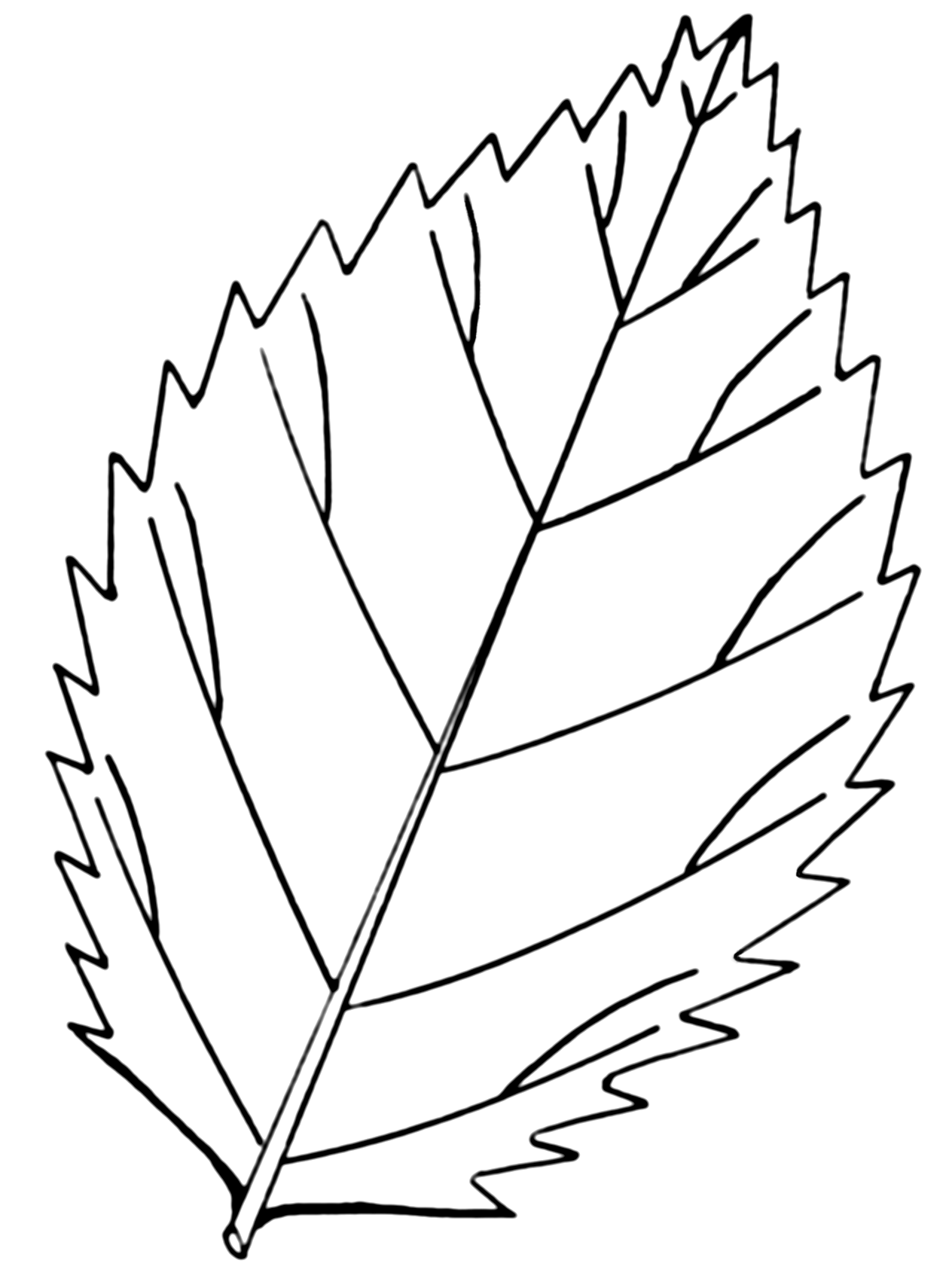 Fall Leaf Coloring Page Printables