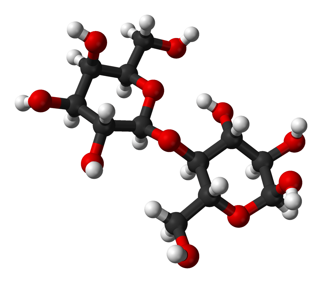 File:Alpha-lactose-from-xtal-3D-balls.png - Wikipedia