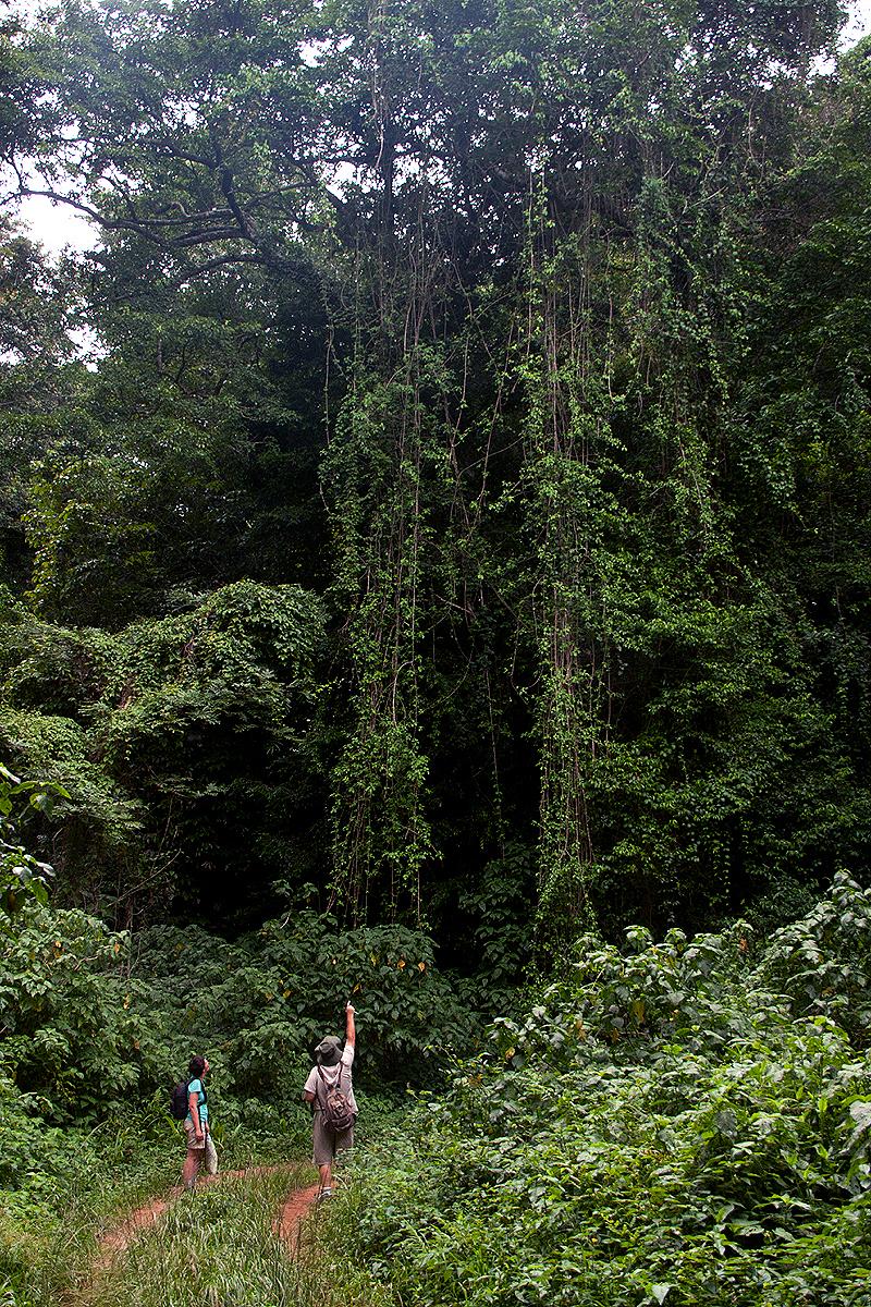 Chirinda Forest Botanical Reserve Wikipedia