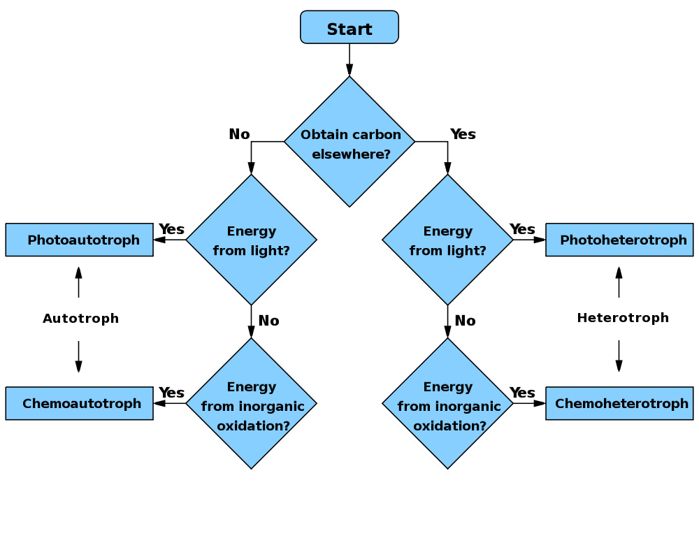 Microbiology Unknown Flow Chart