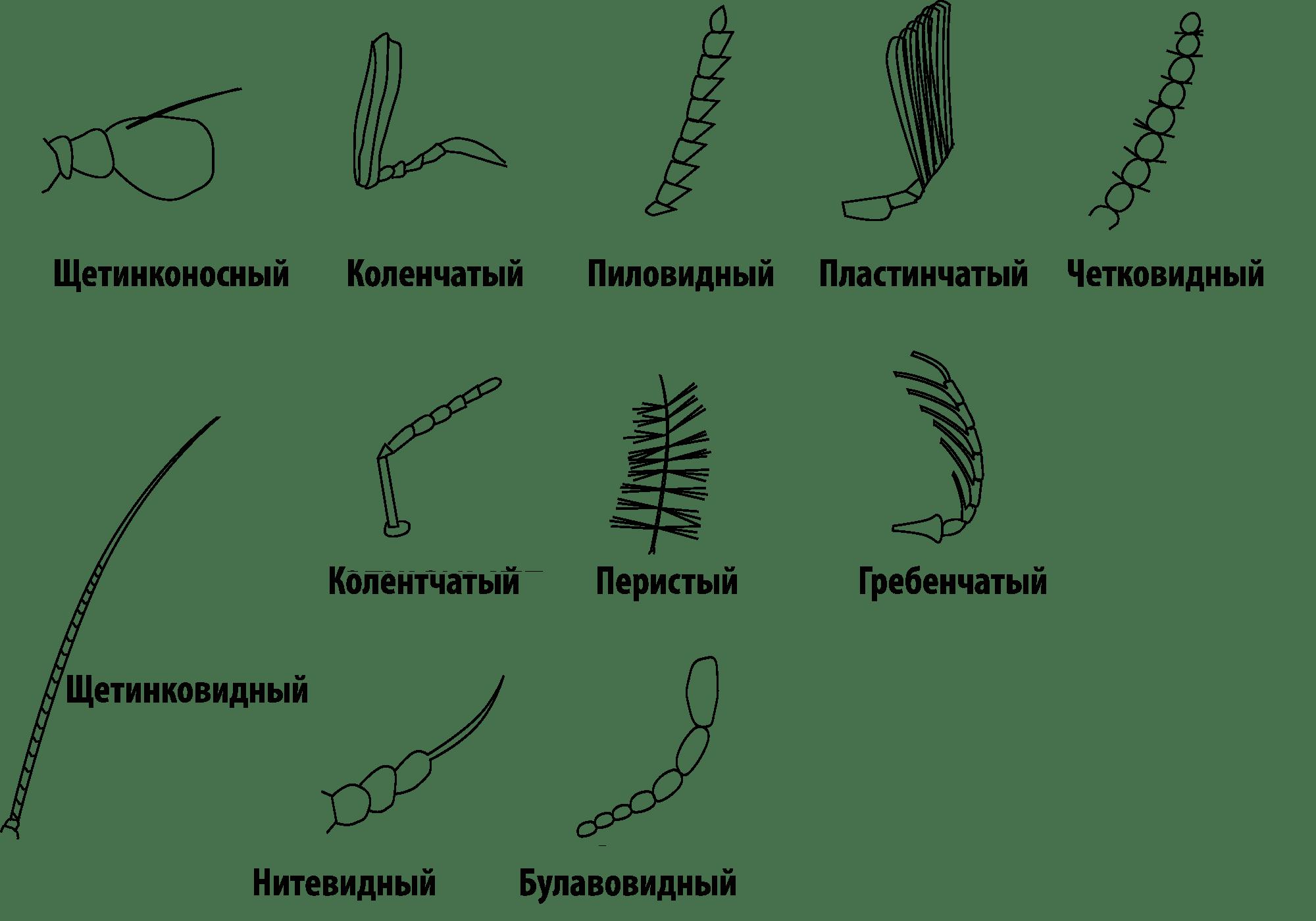 Grasshopper Anatomy Worksheet