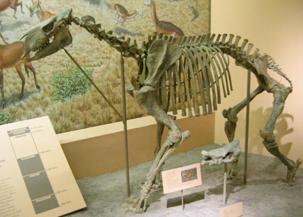 3 Middle Mammals Ear Bones