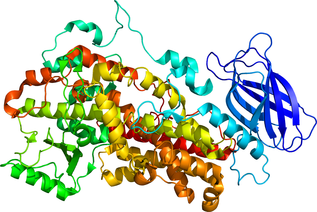 Structure Human Cell Molecular
