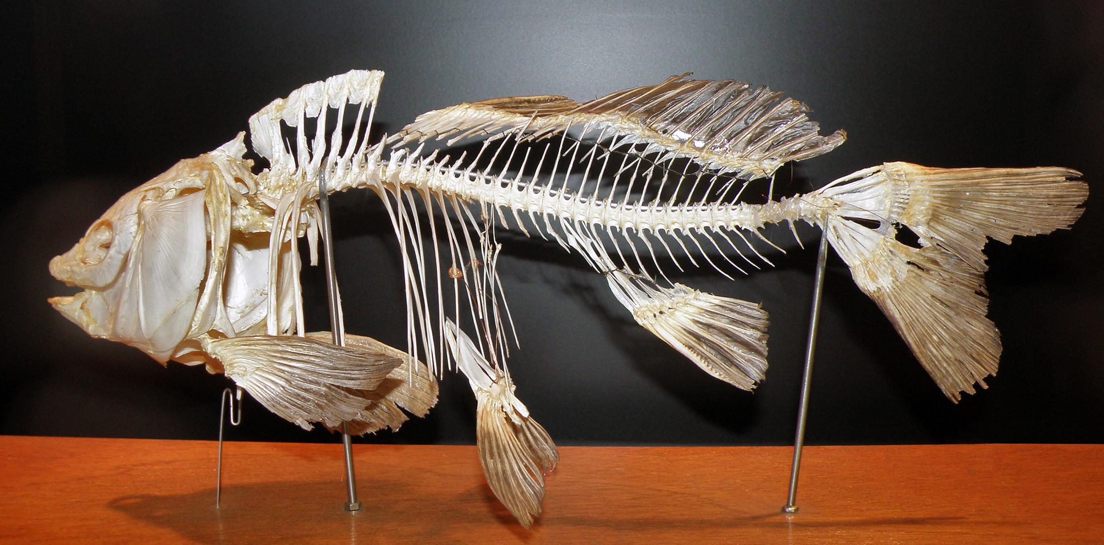 Pattern Skeleton Printable Baby