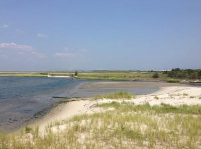 File:2013-08-21 12 34 24 Wetlands along Barnegat Bay near ...