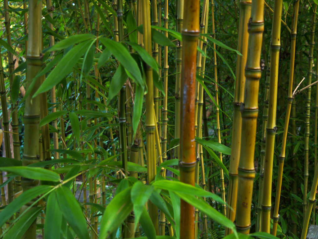 Clumping Plants Non Bamboo