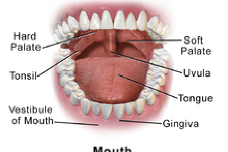 Mouth Map Teeth Path Decorations Pictures Full Path Decoration